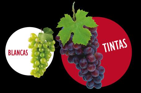 Categoría de los vinos